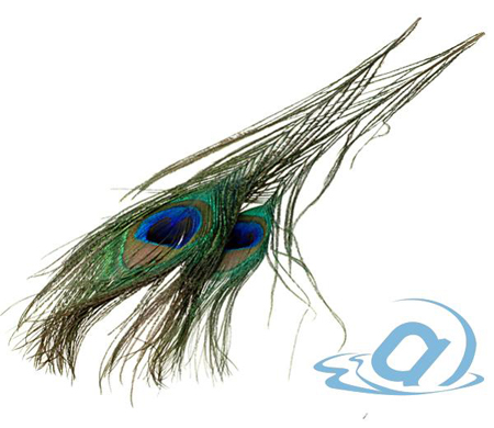 Перья павлина глазковые Fly-Fishing Peacock Eyes Natural